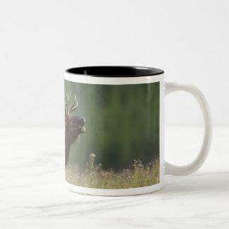 Bull Elk bugling, Yellowstone NP, Wyoming Two-Tone Mug
