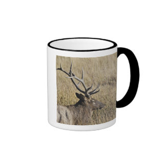 Bull Elk Crossing Madison River, Yellowstone 3 Ringer Mug