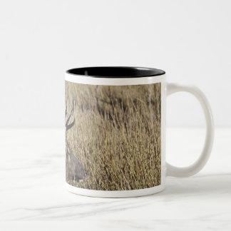 Bull Elk Crossing Madison River, Yellowstone 3 Two-Tone Mug