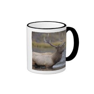 bull elk crossing river, Yellowstone NP, Wyoming Ringer Mug
