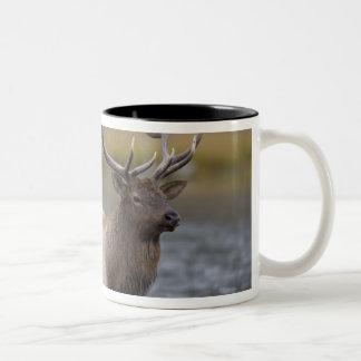 bull elk crossing river, Yellowstone NP, Wyoming Two-Tone Mug