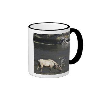 Bull Elk Drinking from Madison River Ringer Mug