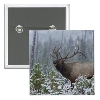 Bull Elk in snow calling, bugling, Yellowstone Pins