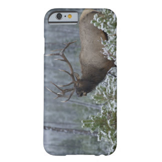 Bull Elk in snow calling, bugling, Yellowstone Barely There iPhone 6 Case
