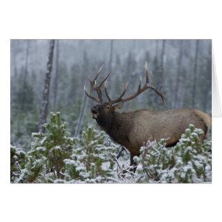 Bull Elk in snow calling, bugling, Yellowstone Greeting Card