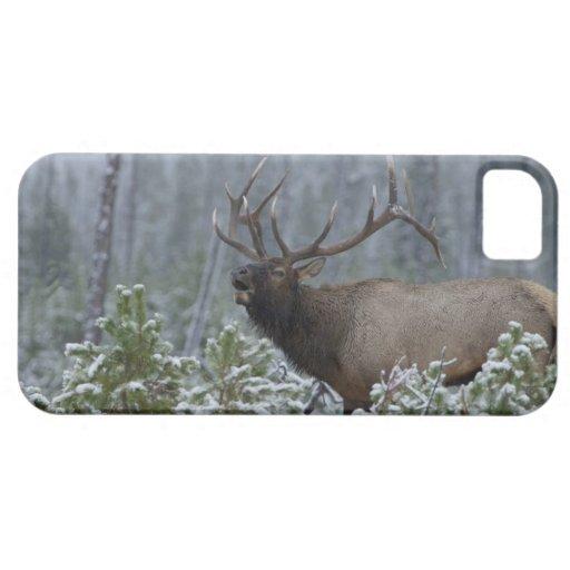 Bull Elk in snow calling, bugling, Yellowstone iPhone 5 Case