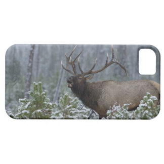 Bull Elk in snow calling, bugling, Yellowstone iPhone 5 Covers