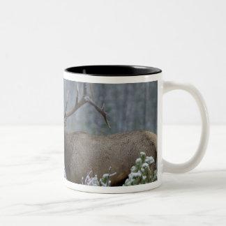 Bull Elk in snow calling, bugling, Yellowstone Two-Tone Mug