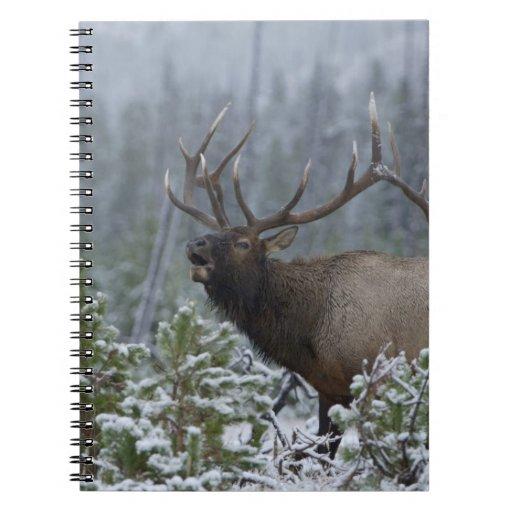 Bull Elk in snow calling, bugling, Yellowstone Note Book