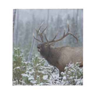 Bull Elk in snow calling, bugling, Yellowstone Notepad