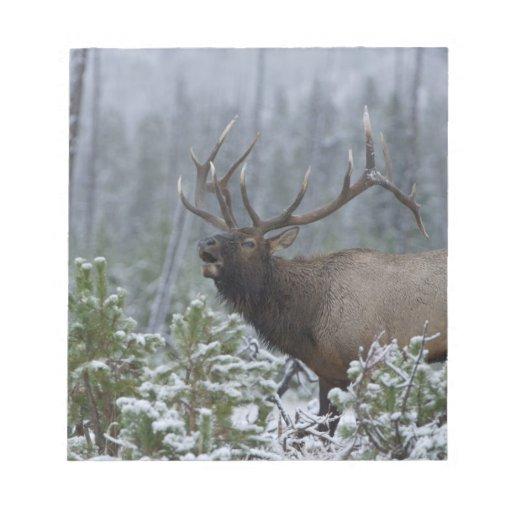 Bull Elk in snow calling, bugling, Yellowstone Memo Pads