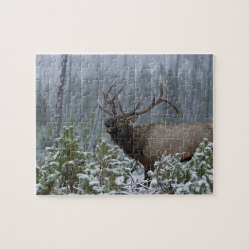 Bull Elk in snow calling, bugling, Yellowstone Puzzle