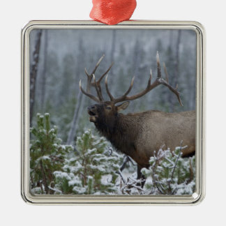Bull Elk in snow calling, bugling, Yellowstone Silver-Colored Square Decoration