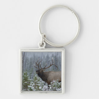 Bull Elk in snow calling, bugling, Yellowstone Silver-Colored Square Key Ring