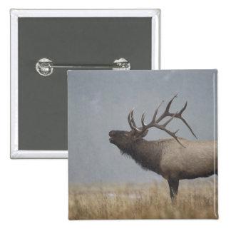 Bull Elk in snow storm calling, bugling, 15 Cm Square Badge