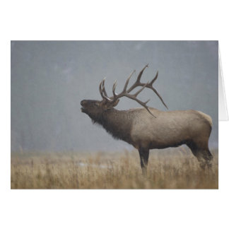 Bull Elk in snow storm calling, bugling, Cards