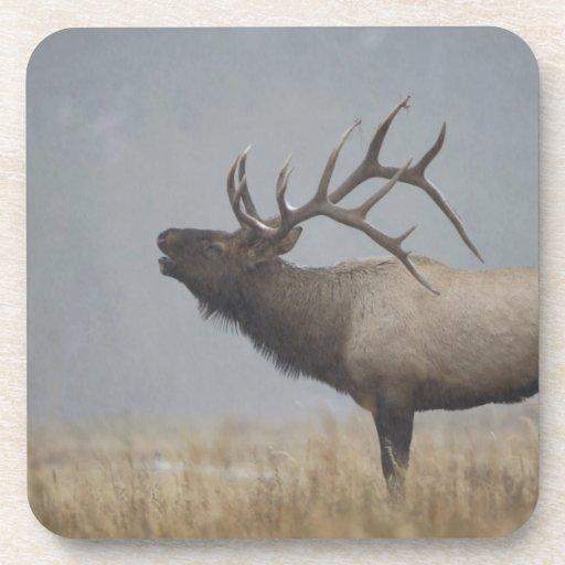 Bull Elk in snow storm calling, bugling, Beverage Coasters