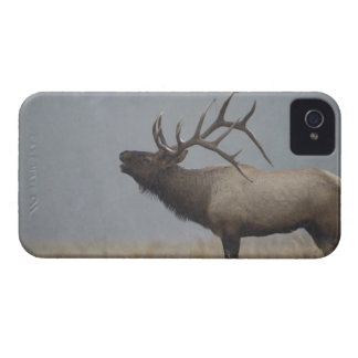 Bull Elk in snow storm calling, bugling, iPhone 4 Case-Mate Case