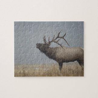 Bull Elk in snow storm calling, bugling, Puzzles