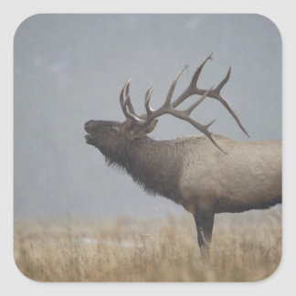 Bull Elk in snow storm calling, bugling, Stickers