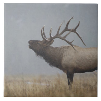 Bull Elk in snow storm calling, bugling, Large Square Tile