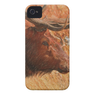 Bull Elk iPhone 4 Case-Mate Case