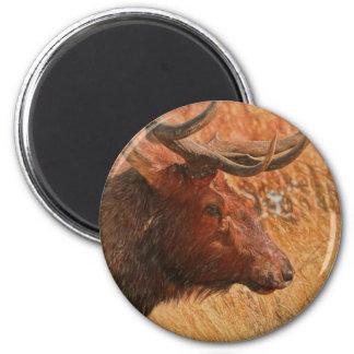 Bull Elk Magnet