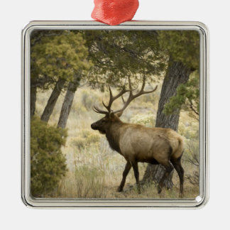 Bull Elk, Yellowstone National Park, Wyoming, Metal Ornament