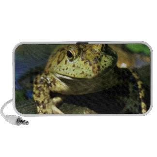 Bull frog. laptop speaker