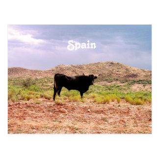 Bull in Spain Postcard