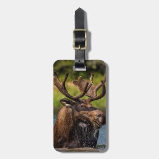 Bull moose feeding in Glacier National Park Luggage Tag