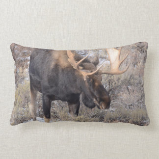 Bull Moose in field with Cottonwood Trees Lumbar Cushion