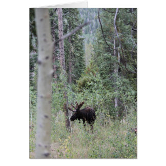 Bull moose in the woods card