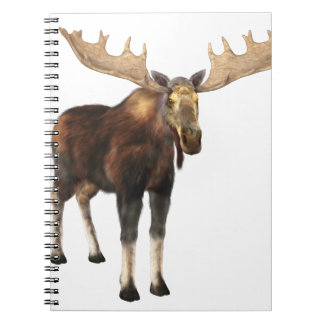 Bull Moose Looking to the Front Spiral Note Books