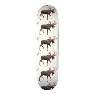 Bull Moose Skate Board Decks