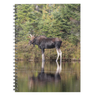 Bull Moose Spiral Note Book