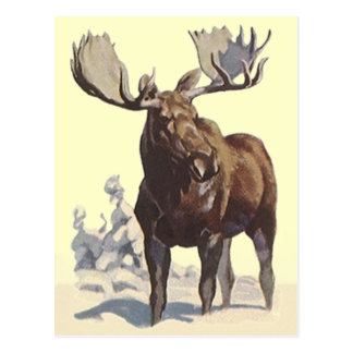 Bull Moose ~ Sunny Winter Day TRAVEL POSTCARD