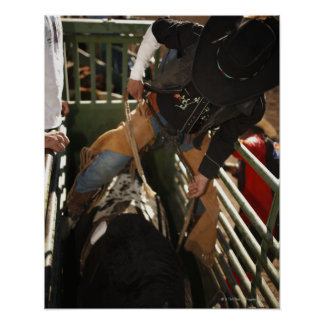 Bull rider tying rope on bull in the chute poster