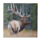 Bull Rocky Mountain Elk Ceramic Tile