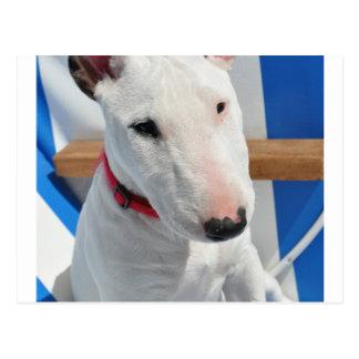 bull-terrier-sitting.png postcard