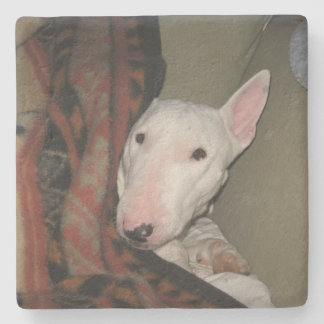 Bull Terrier Snuggled Under a Blanket (Colour) Stone Coaster