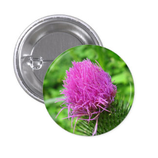 Bull Thistle Button