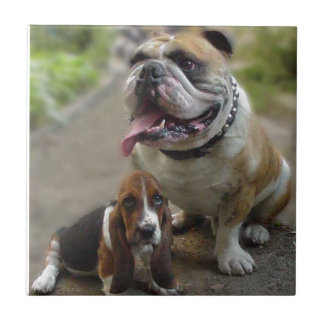 Bulldog & BabyBassett - BE aware OF my best friend Tile