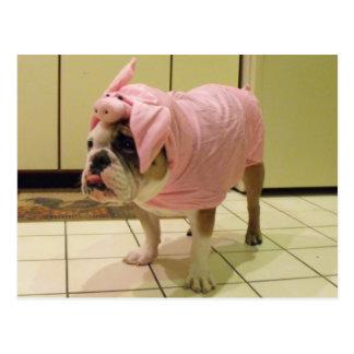 bulldog costume postcard