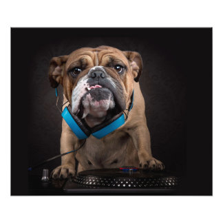 bulldog dj - dj dog photo print