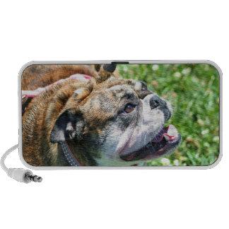 Bulldog doodle speaker