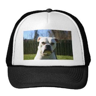 Bulldog Face Cap