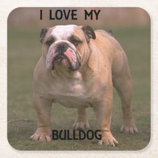 bulldog fawn and white love w pic square paper coaster