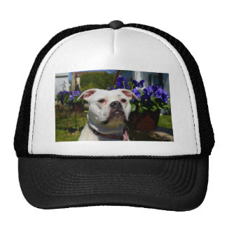 Bulldog Flowers Cap
