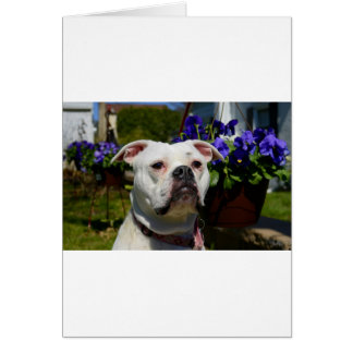 Bulldog Flowers Card